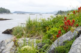 Rugged outer islands and wild flowers