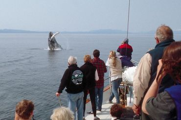 Whale Watching from Boat